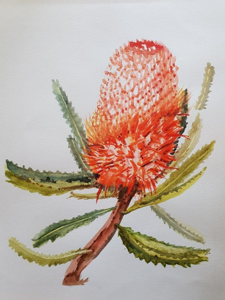 Banksia 1