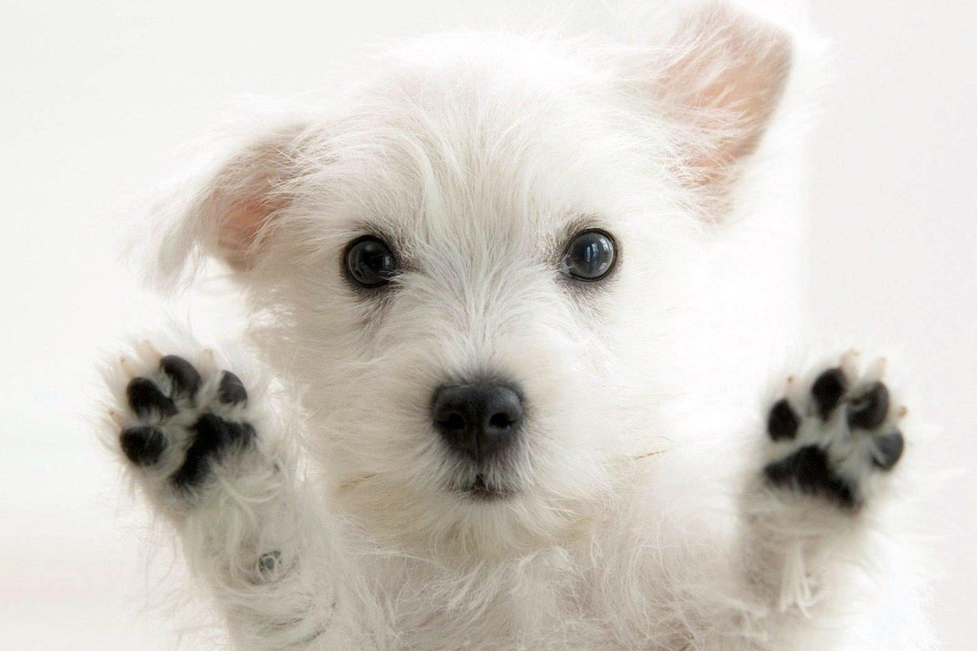 imagen de perro - 1280×720