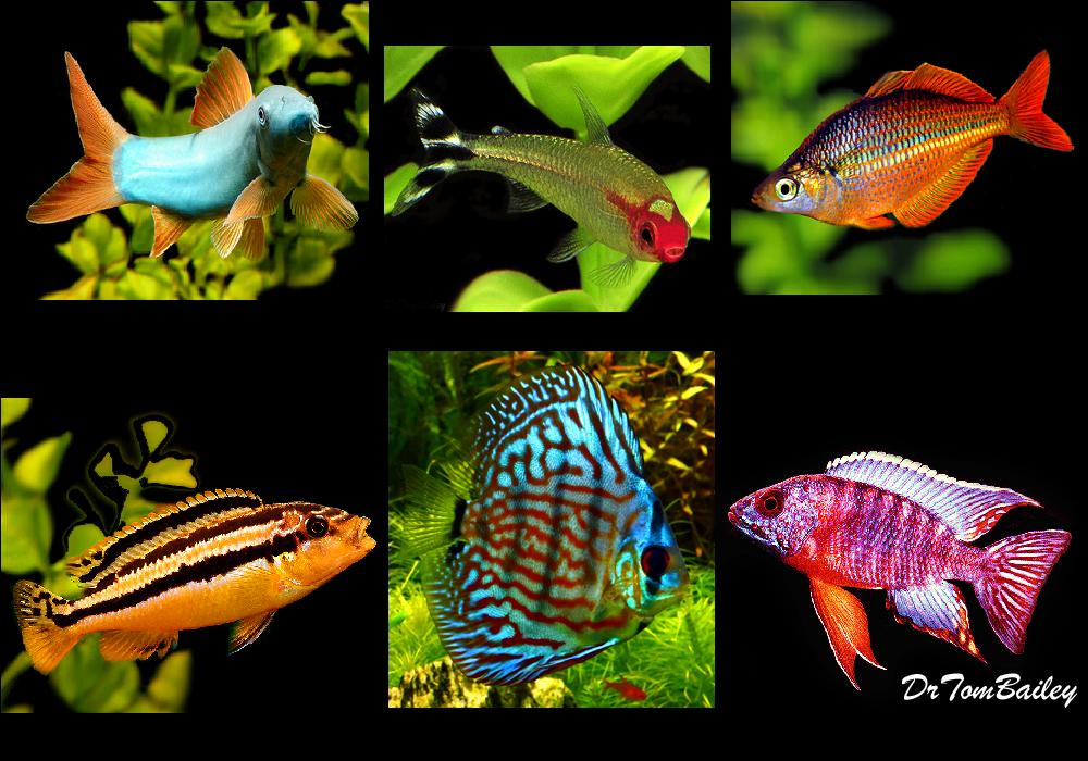 AquariumFish net